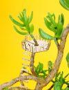 Amazing planthouse: kraaiennest crowsnest