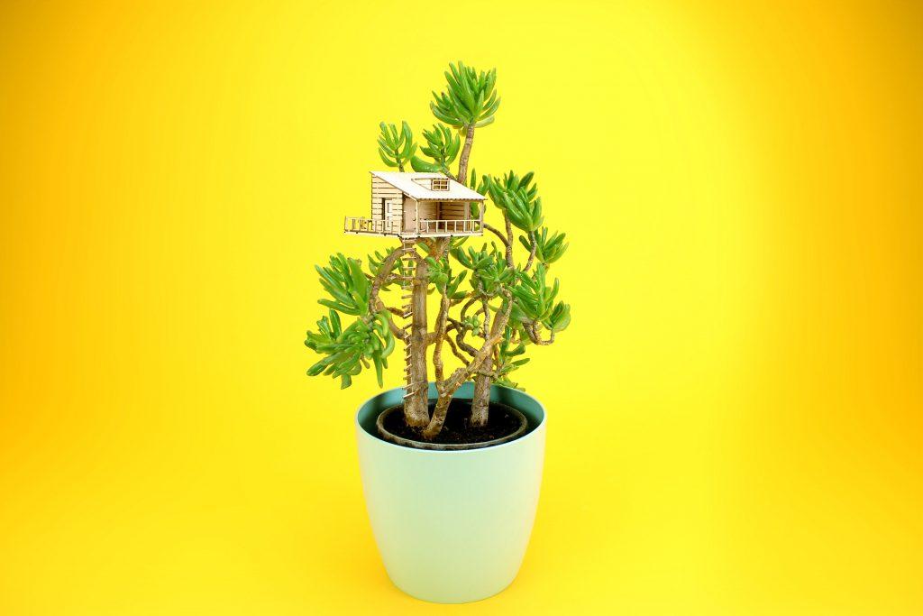 Amazing planthouse: Planthut
