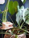 Amazing-planthouse-planthut-in-Monstera