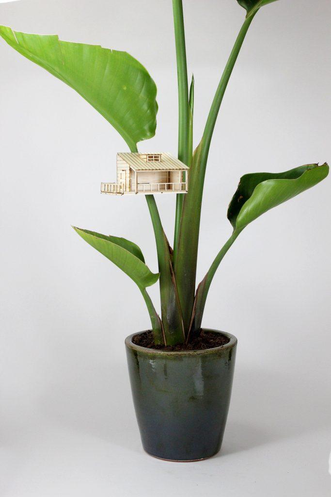 Amazing-planthouse-planthut-in-strelitzia