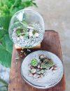 Boek Judith Baehner groen in glas terrarium terraria flessentuin