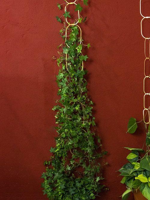 Botanopia messing plantenketting klimondersteuning voor planten