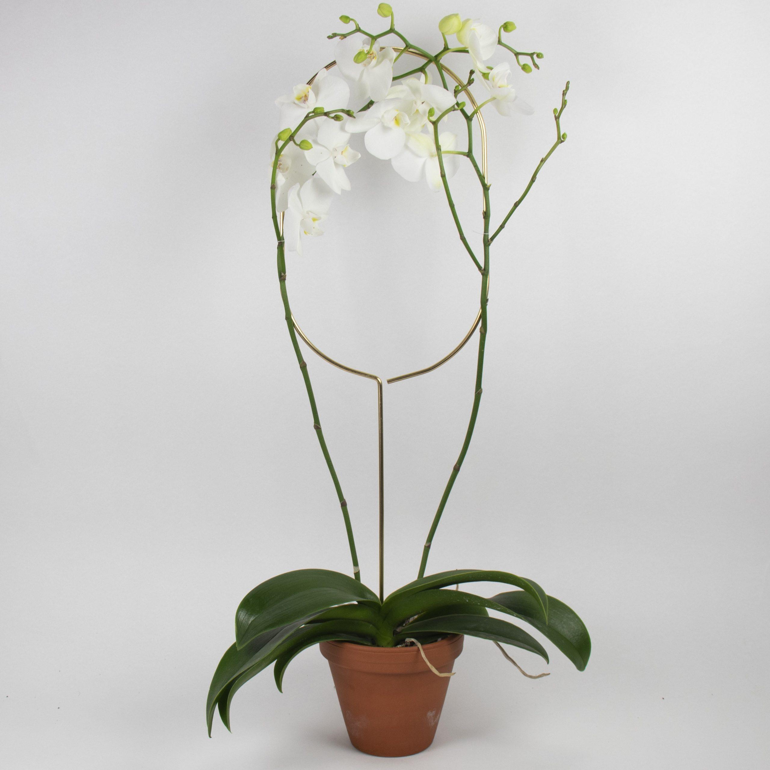 Botanopia plantenstandaard ondersteuning boog met orchidee