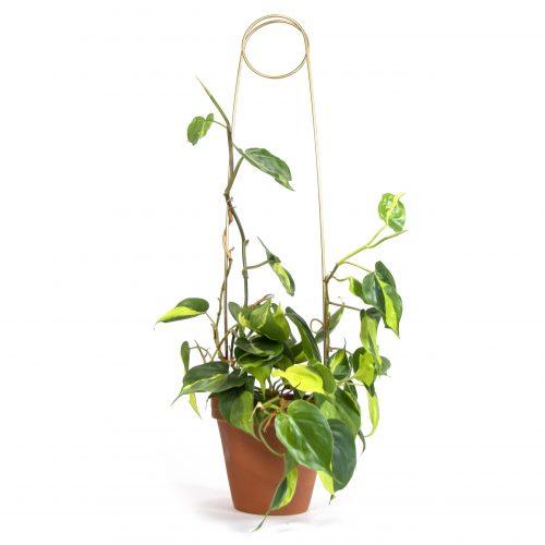 Botanopia plantenstandaard ondersteuning pin