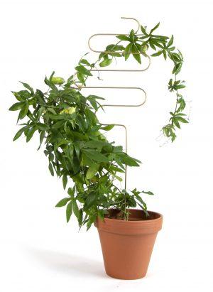 Plantondersteuning