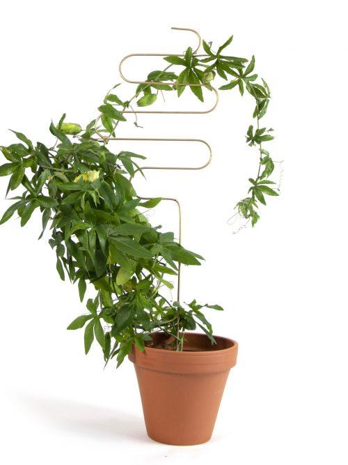 Botanopia plantenstandaard ondersteuning squiggle