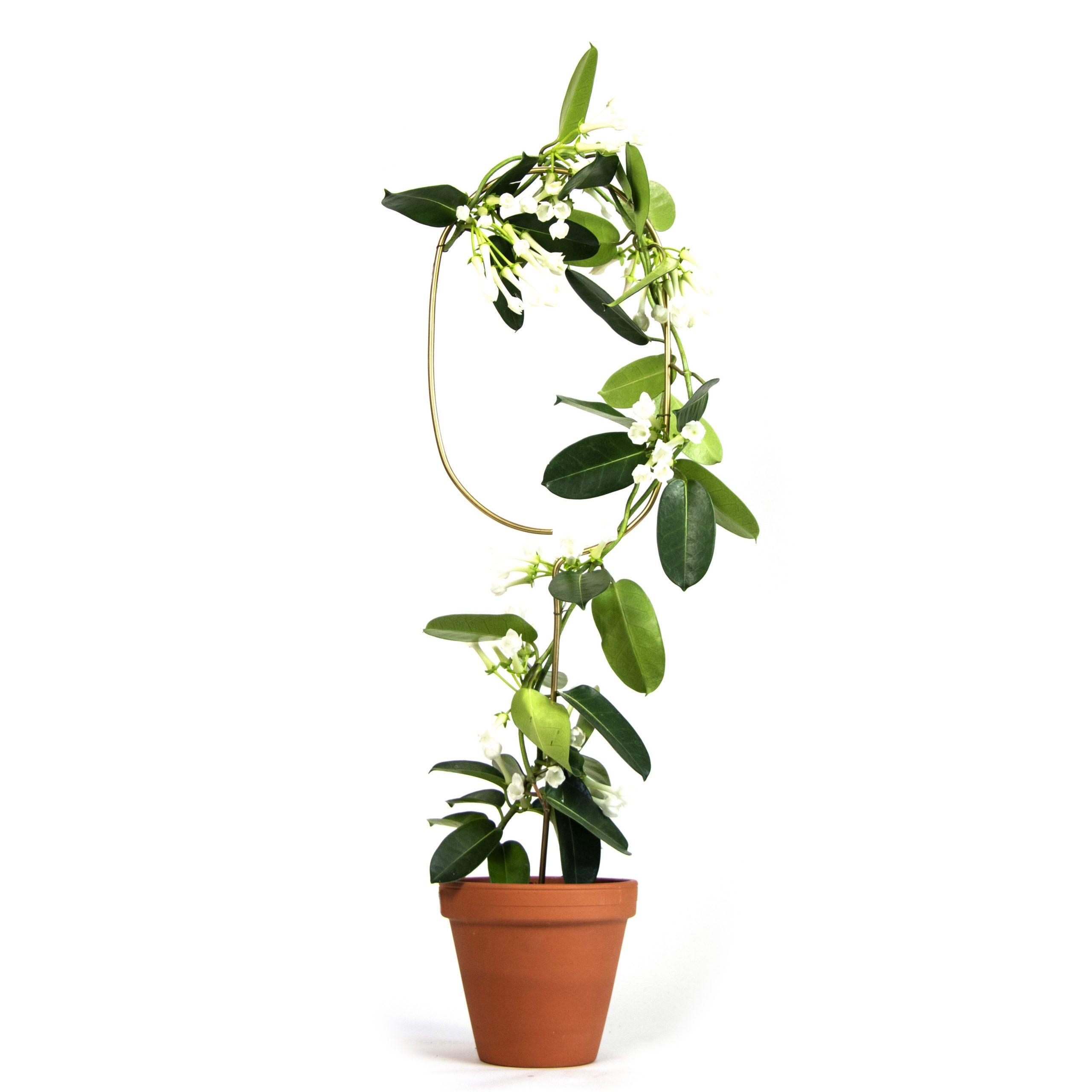 Botanopia plantenstandaard ondersteuning boog