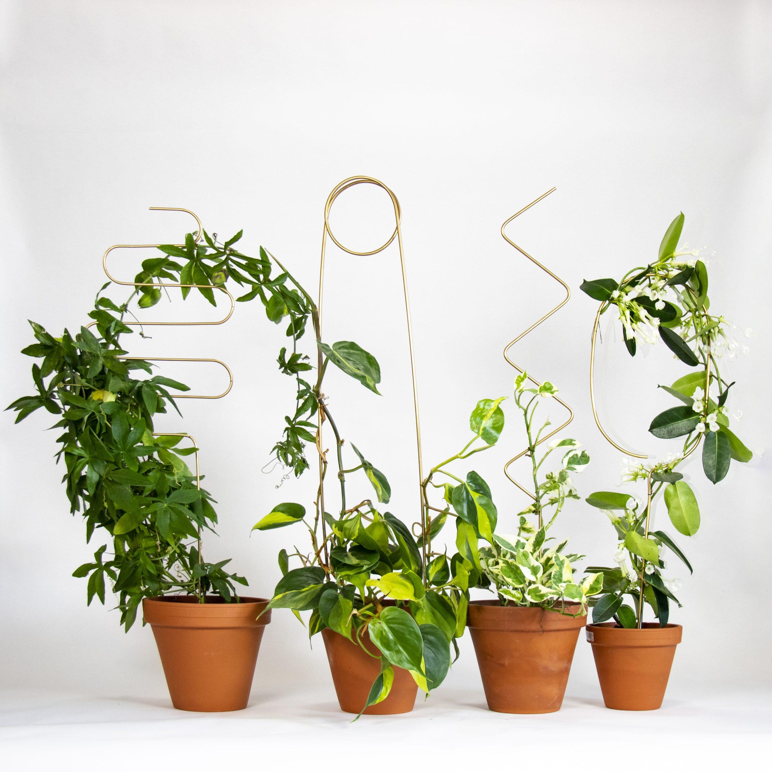 Botanopia plantenstandaard ondersteuning diverse soorten