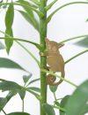Another Studio Plant Animal Bush Baby Galago