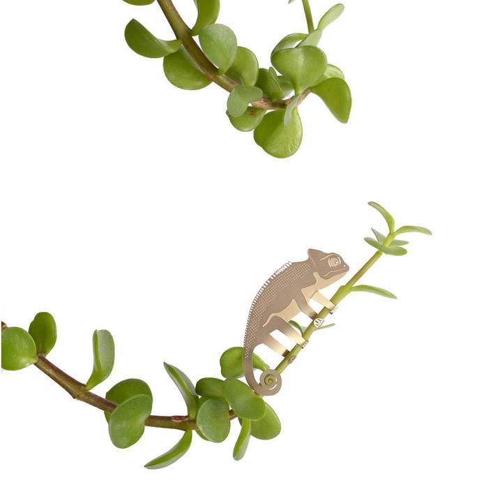 Another Studio Plant animal Chameleon kameleon