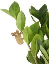 Another Studio Plant Animal koala