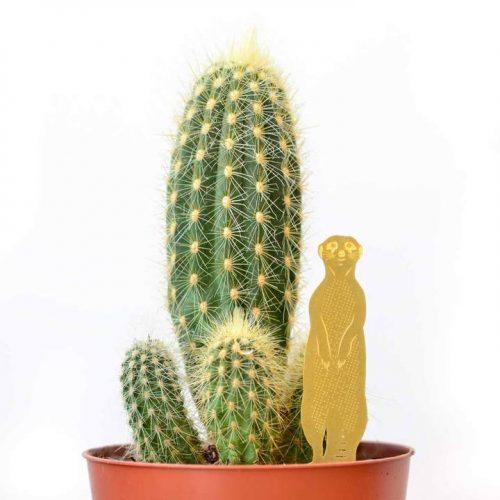 Another studio plant animal meerkat stokstaartje