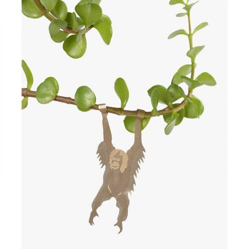 Another studio Plant animal oran-oetang orangutan