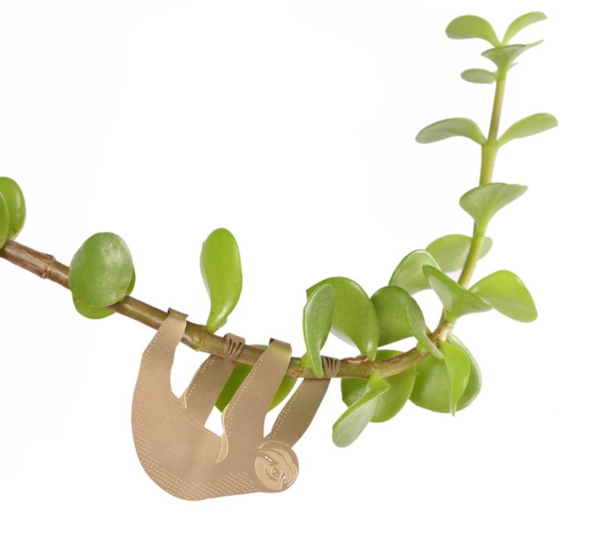 Another Studio Plantenkamer Plant animal sloth luiaard