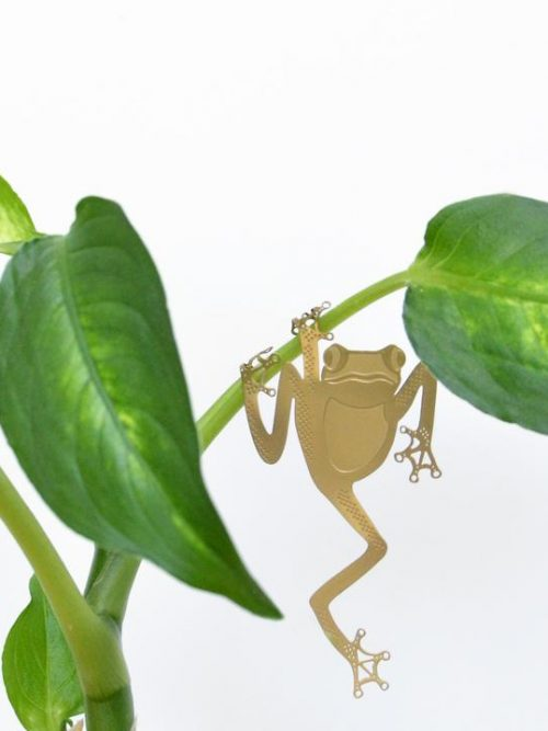 Another Studio Plant Animal Tree Frog Boomkikker kikker
