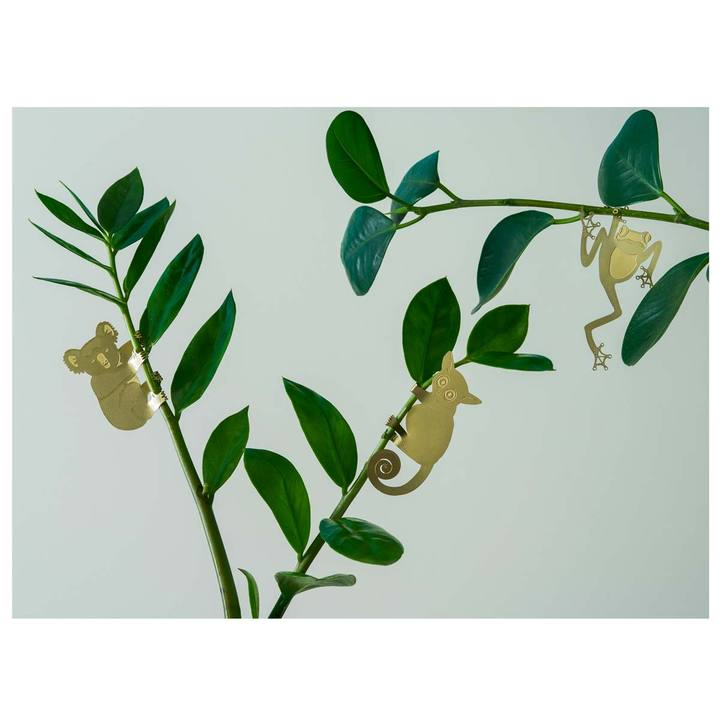 Plant Animal animals Tree Frog kikker koala bush baby galago