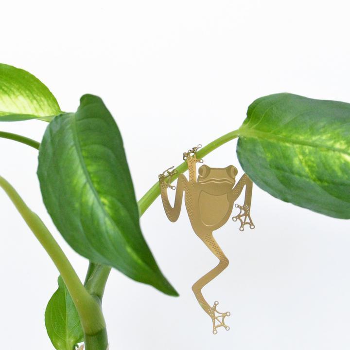 Another Studio Plant Animal Tree Frog Boomkikker kikker