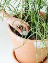 Soil Sisters grondleggers plantenvoeding in pot