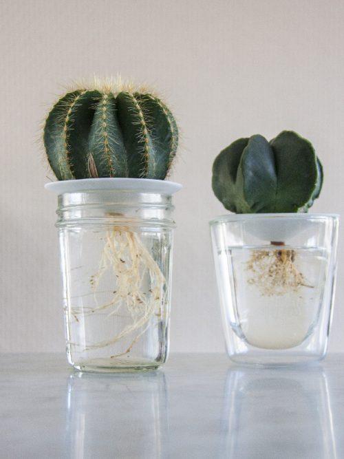 Botanopia kiemschotel Sprout maat L
