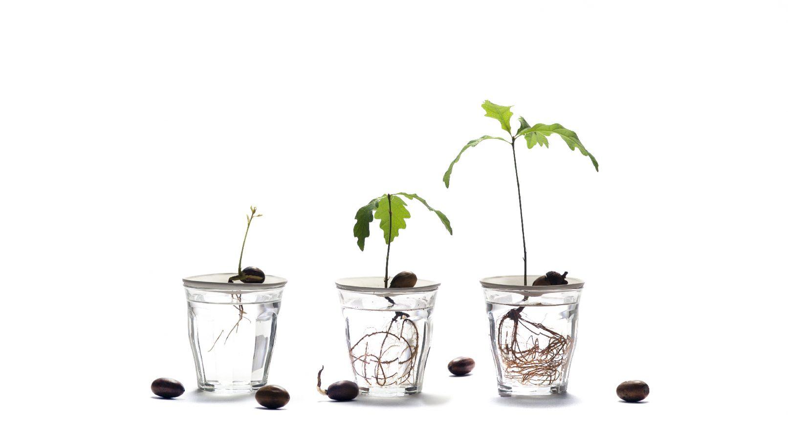 Botanopia kiemschotel Sprout maat S