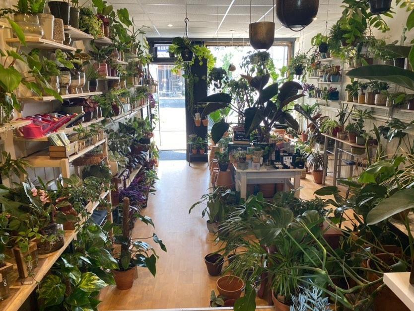 De-plantenkamer