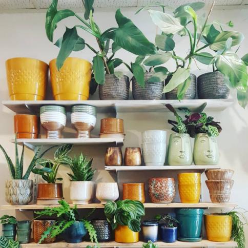 de-plantenkamer-zaandam