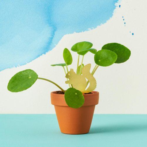 Plantenkamer-plant-animal-another-studio-eekhoorn