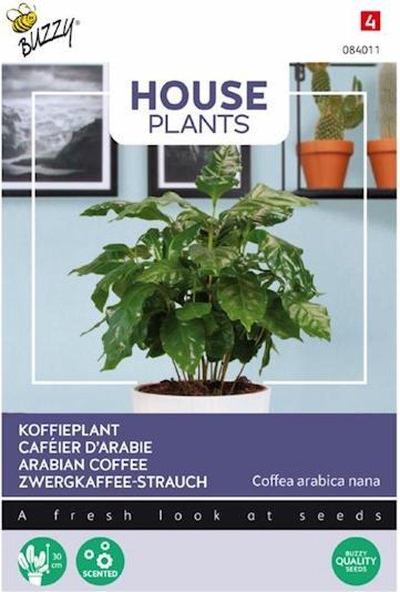 Plantenkamer-zaden-buzzy-coffea-arabica-koffieplant.jpg