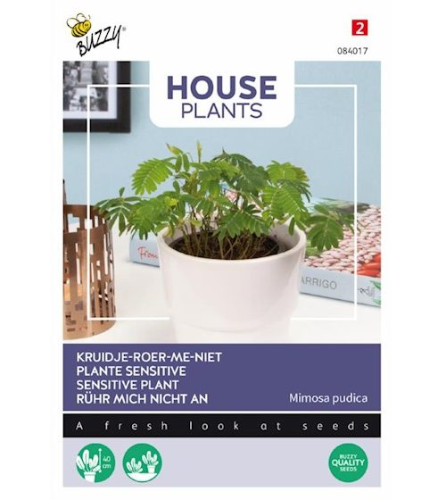 Plantenkamer-zaden-mimosa-pudica-kruidje-roer-mij-niet
