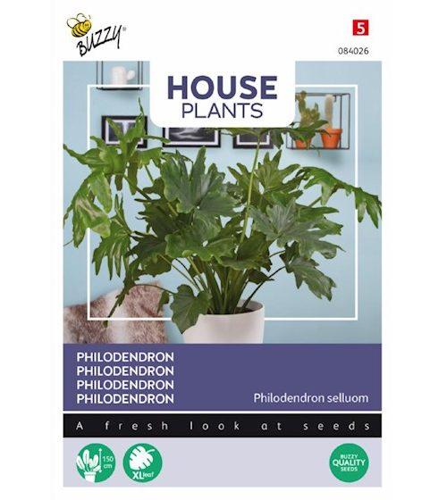 Zaden-buzzy-seeds-philodendron-selloum