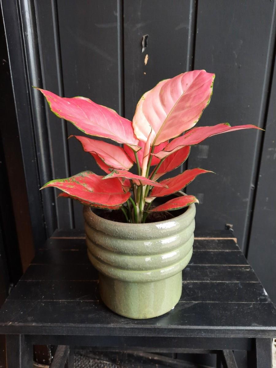 Plantenkamer-bloempot-groen-voet-ribbels