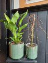 Plantenkamer-bloempot-ruiten-groen_
