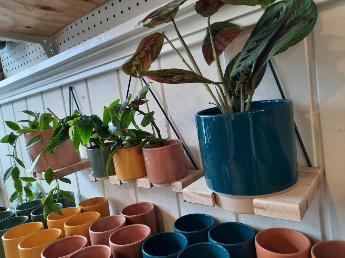Plantenkamer-feniks-bloempot-eno-hanger