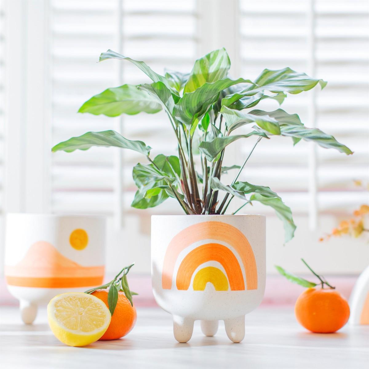 Plantenkamer-sass-belle-rainbow-planter-large