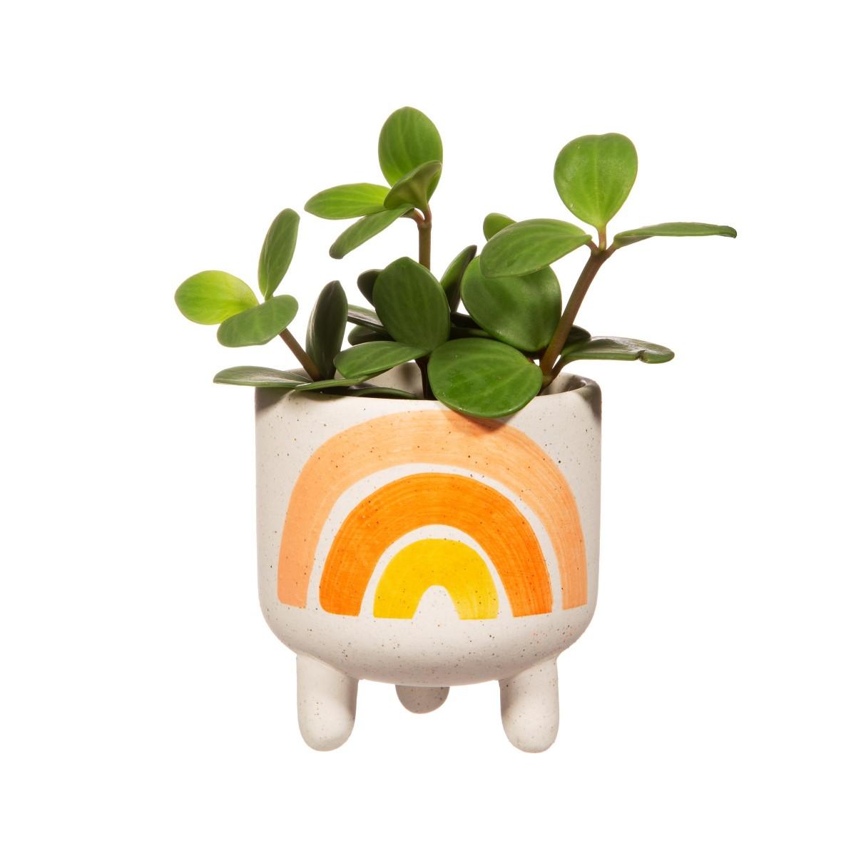 Plantenkamer-sass-belle-rainbow-planter-mini