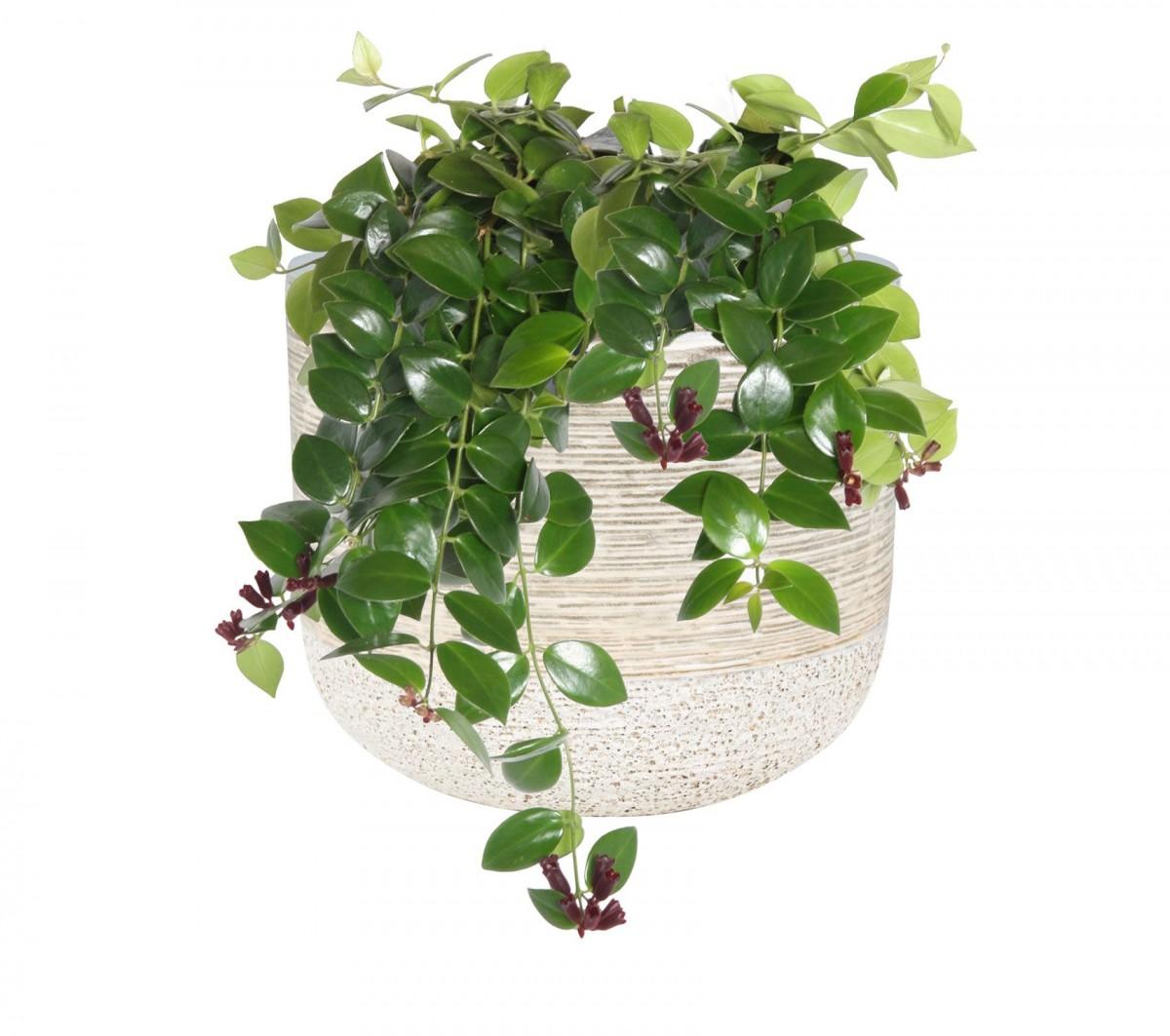 Plantenkamer-issa-lichtgrijs-wandhanger