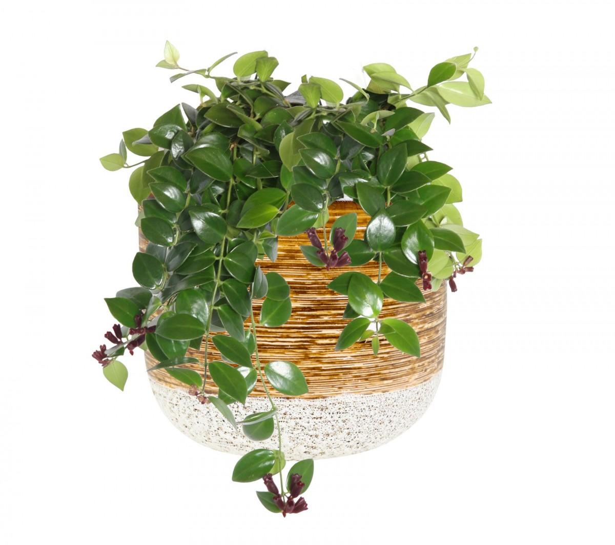 Plantenkamer-issa-mosterd-wandhanger