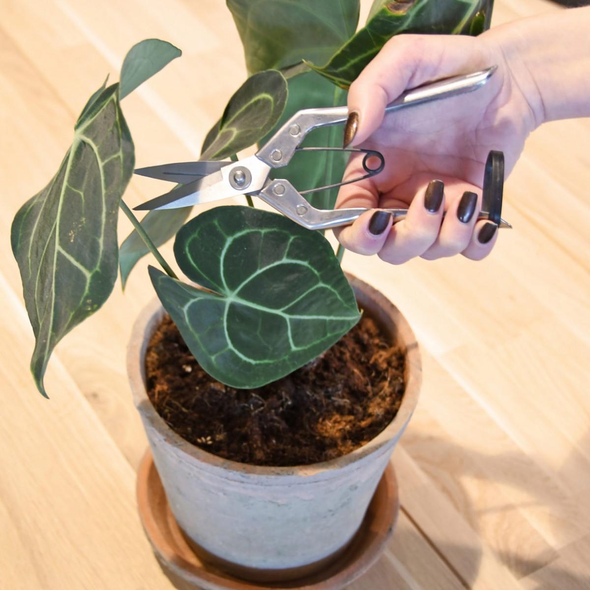Plantenkamer-kamerplant-snoeischaar-esschert-design