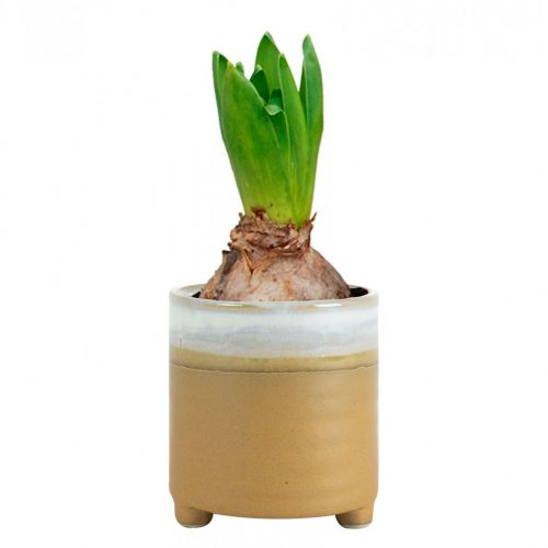 Plantenkamer-nik-caramel