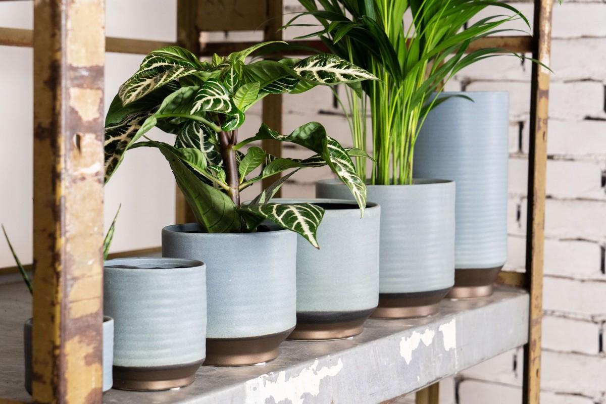 Plantenkamer-suze-blauw