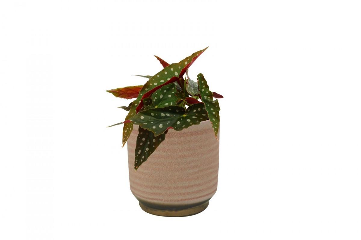 Plantenkamer-suze-roze-D10