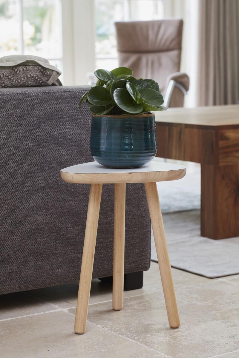 plantenkamer-Iris-turquoise
