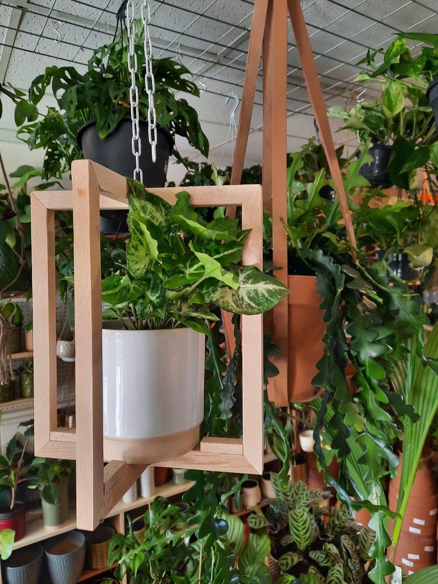 Plantenkamer-stade-plantenhanger