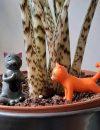Plantenkamer-yoga-cats-planters-main_