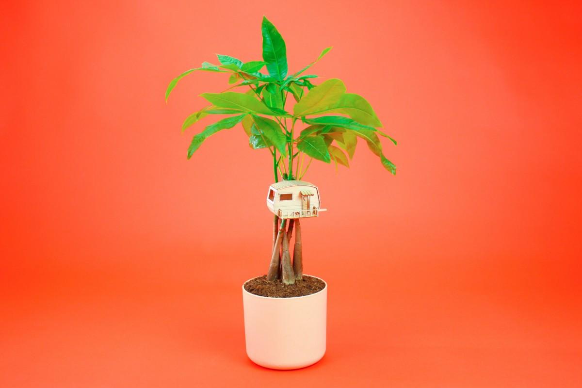 Plantenkamer-amazing-planthouse-plant-caravan
