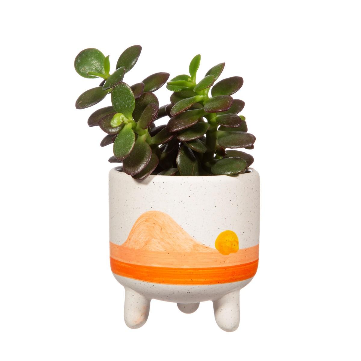 Plantenkamer-sass-belle-sunset-planter