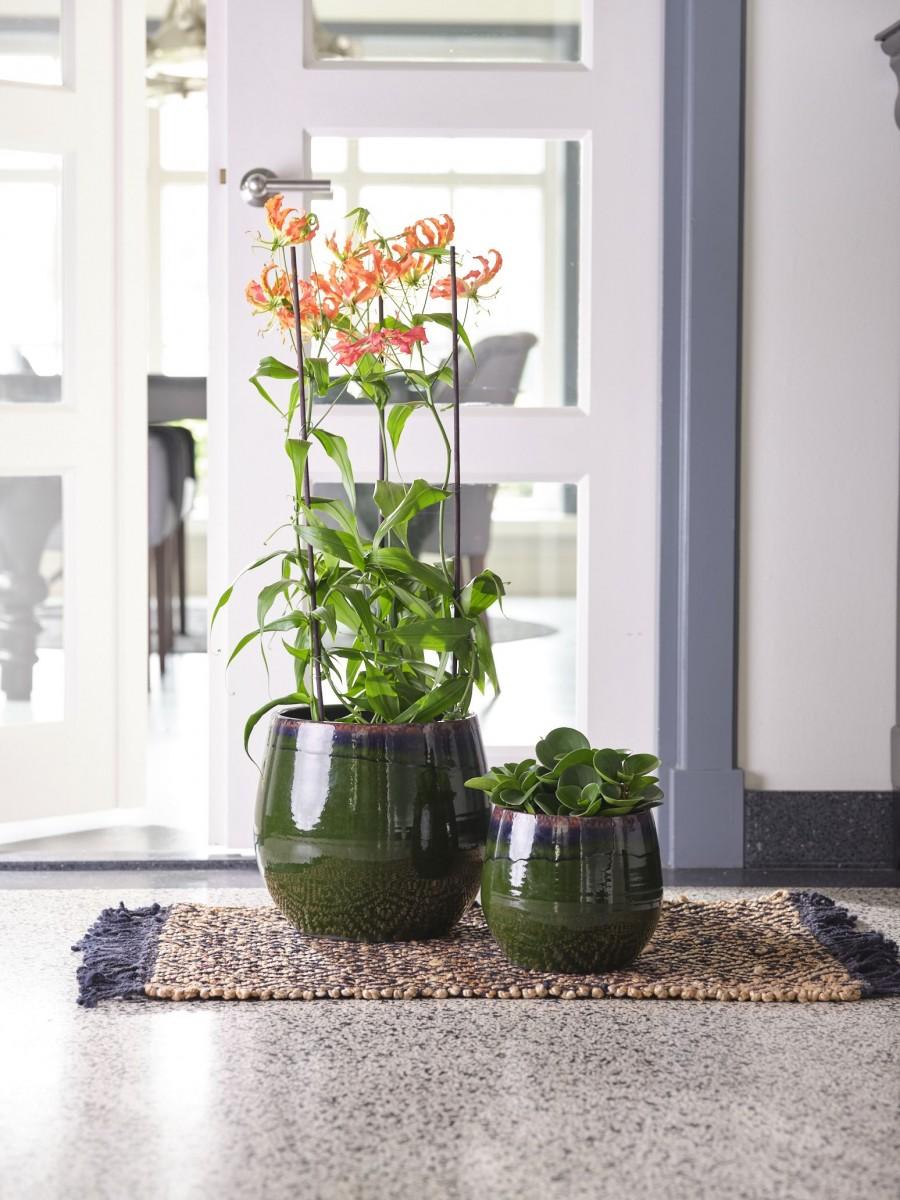 Plantenkamer-Charlotte-groen