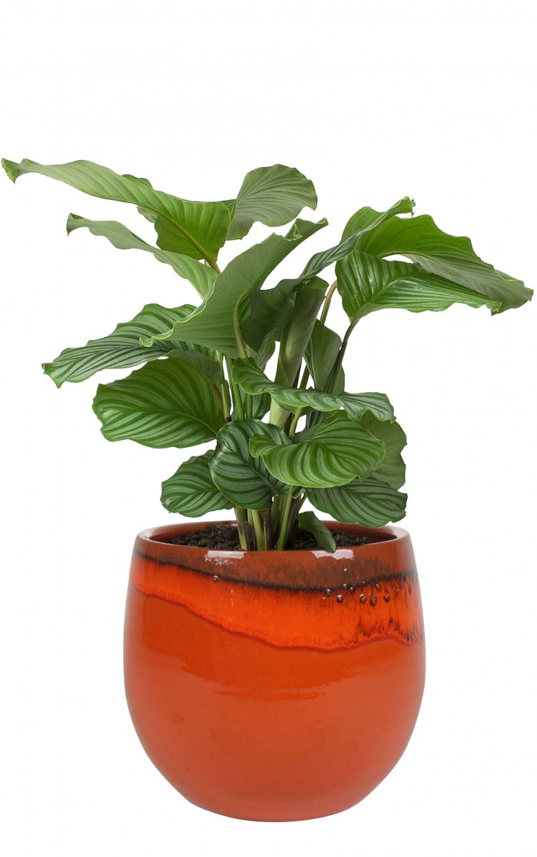 Plantenkamer-Charlotte-oranje