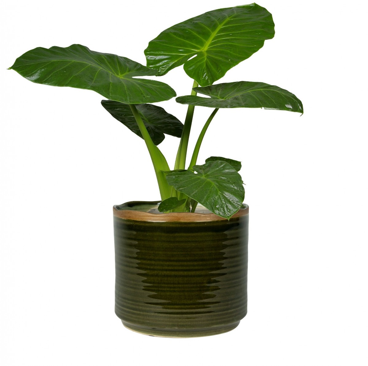 Plantenkamer-Jordy-forest-groen