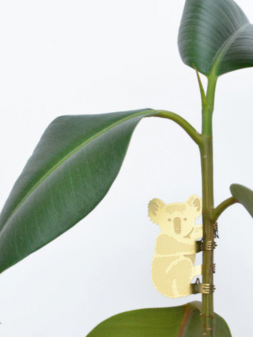 Another Studio Plant Animal koala